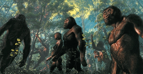 miocene-hominoids