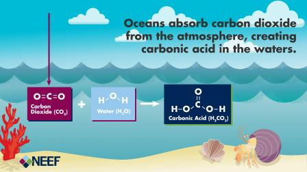 ocean-acidification-3