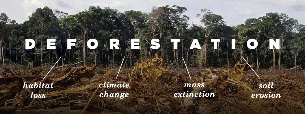 Habitat Loss — Bagelparrot Conservation Alliance