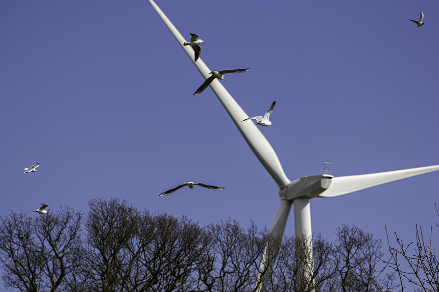 Stop the Spin: Turbines Less Deadly Than Fossil Fuels — ecoRI News